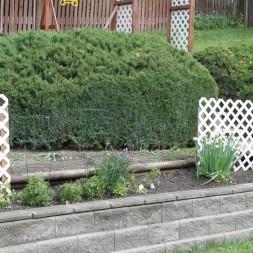 Gardening 101 ~ Vegetables
