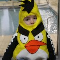 Angry Bird Sightings {I}