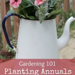 Gardening-101-257E-how-to-plant-annuals