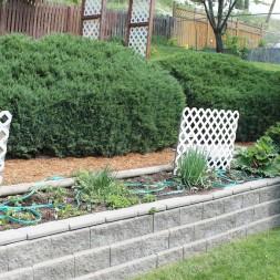 Gardening 101 ~ a Salsa Garden