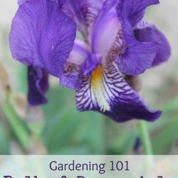 Gardening 101 ~ Perennials