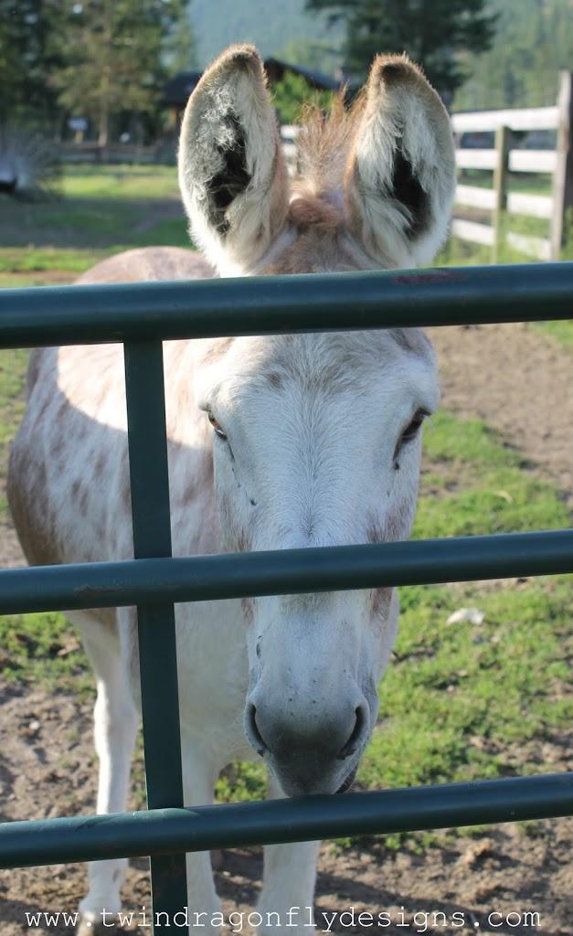 Old Cowboy Ranch ~ Campsite Review