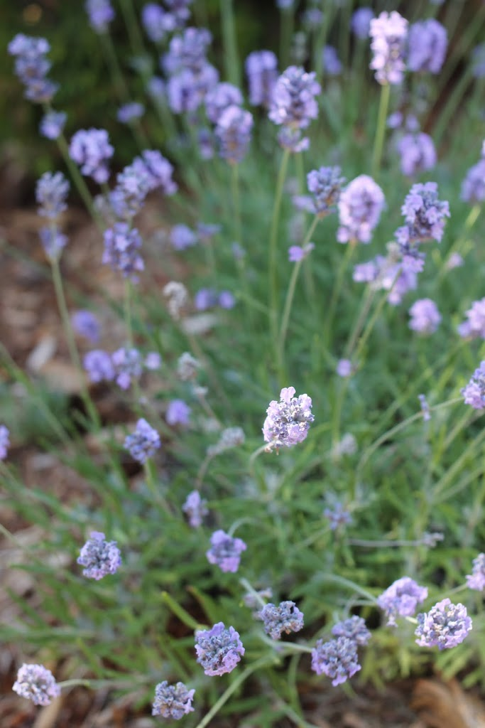 Gardening 101 ~ a quick garden update
