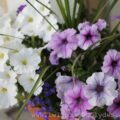 Gardening 101 ~ Planting Annuals