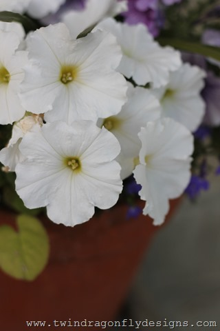 Planting Annuals (13)