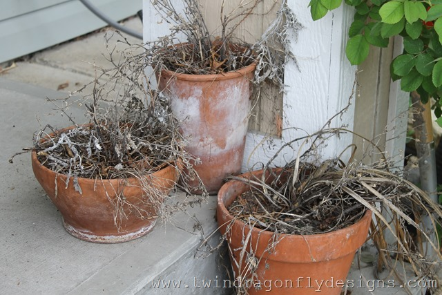 Planting Annuals (1)
