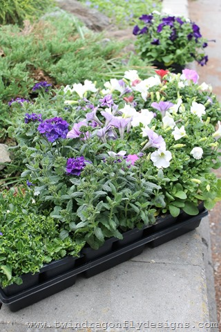 Planting Annuals (4)