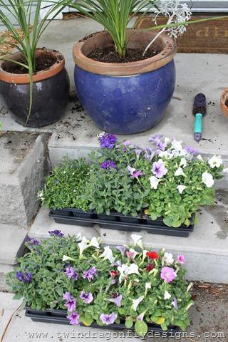 Planting Annuals (5)