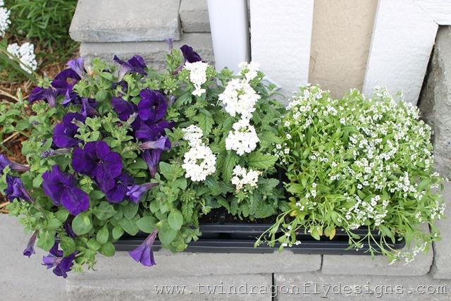 Planting Annuals (6)