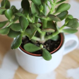 Decorating with plants thumb