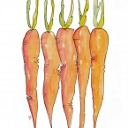 Carrots Line Detail Watermark