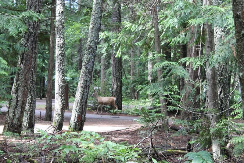 Shuswap Provincial Park