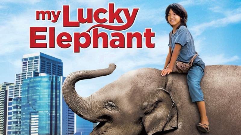 9079465 - my lucky elephant