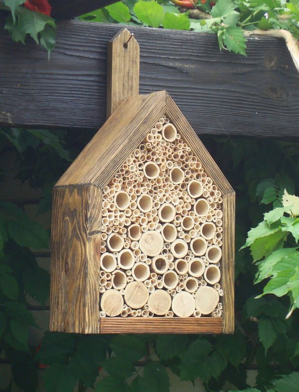 Bee Friendly Home