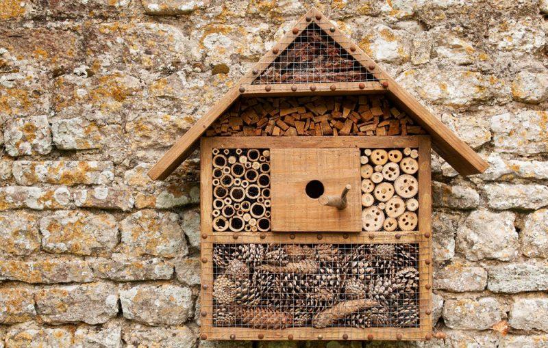 20+ Bee Friendly Ideas for the Garden