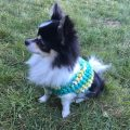 Small Dog Crochet Sweater Pattern
