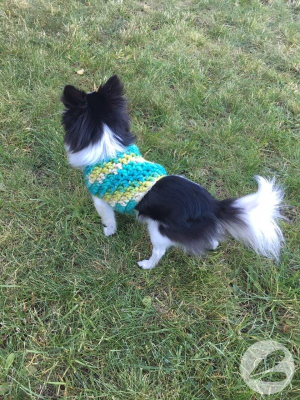 Small Dog Crochet Sweater Pattern