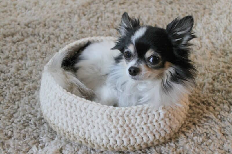 crochet dog bed pattern