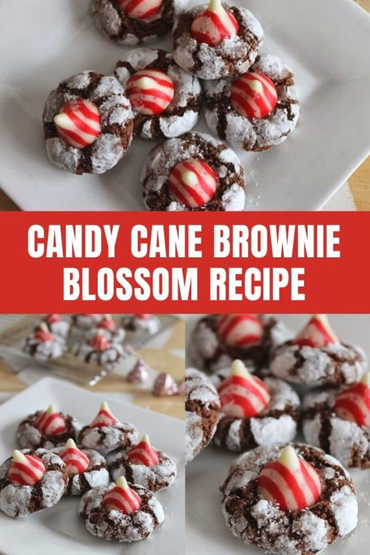 candy cane brownie blossoms